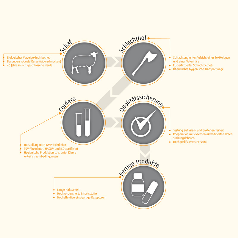 Herstellungsprozess Cell Immun